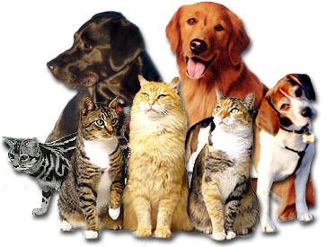 pet preventative healthcare