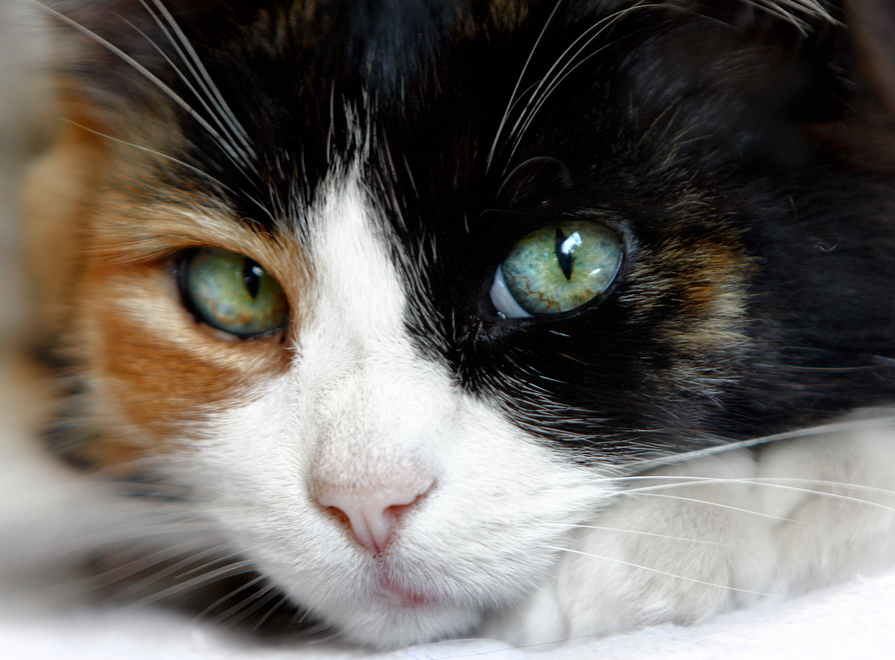 What Is Unusal About Cat Adoptions