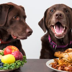 Thanksgiving with Pets: Heavy on the Enjoyable, Gentle on the Journeys to the Emergency Vet